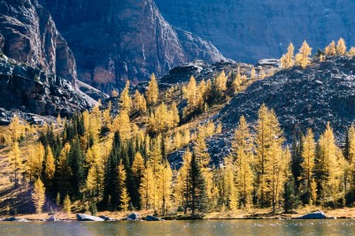 Close up of the trees from across the Hungabee Lake.