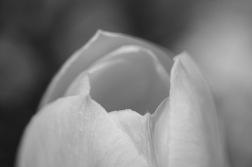 garden-flowers-bw-05
