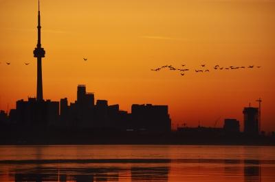 Birds celebrating the coming sunrise